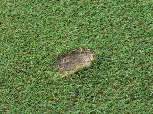 Pitchmark of inslag van golfbal in green gras.